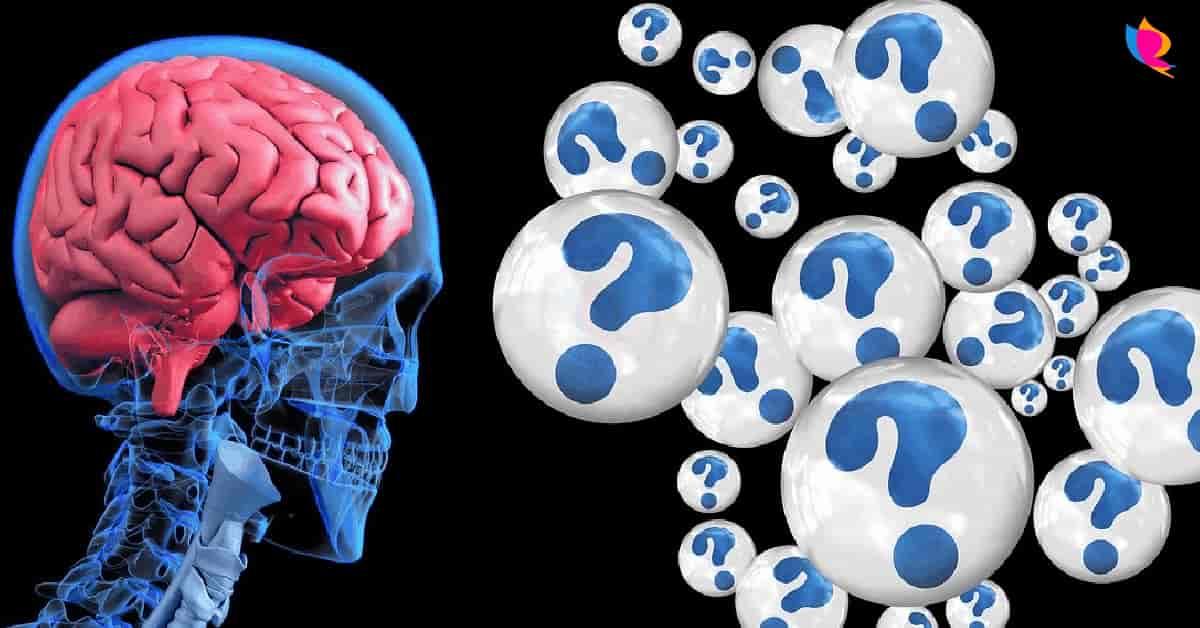 brain-feeding