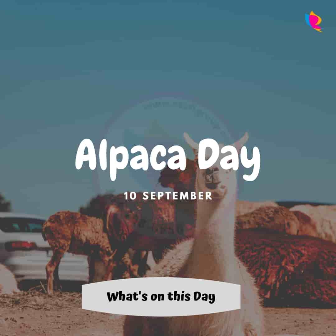 alpaca day