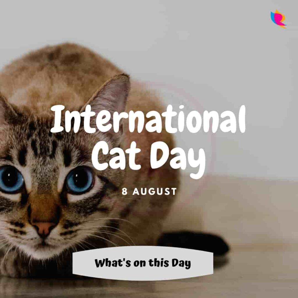 international cat divas