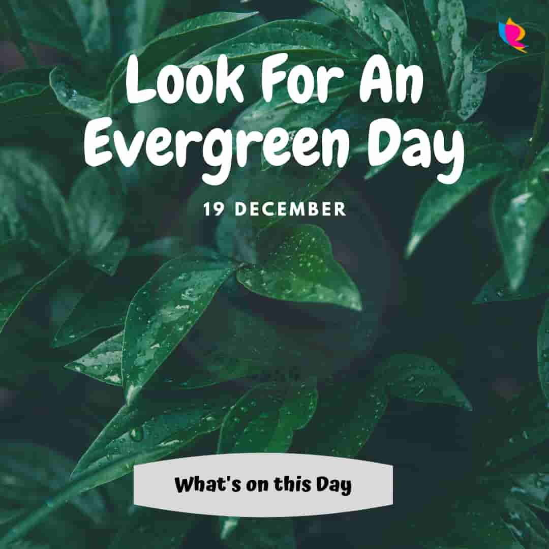Look For an Evergreen Day