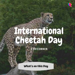 4 International Cheetah Day